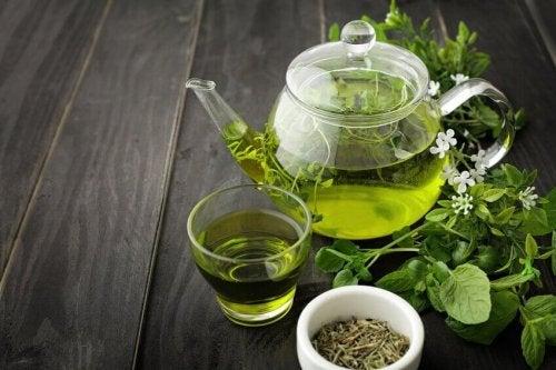 Grüne Tees sind köstliche Abnehmentees