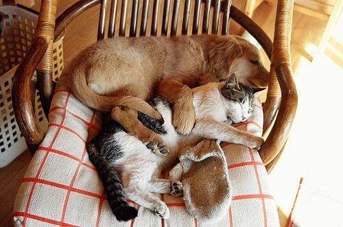 Kreative Schlafplätze für dein Haustier