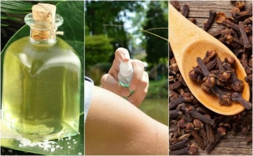 Die 5 besten selbstgemachten Insektenschutzmittel