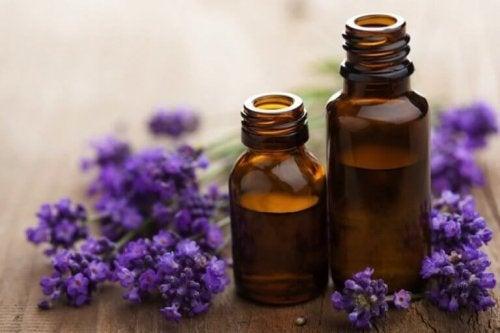 In kleine Flaschen abgefüllter Lavendel.