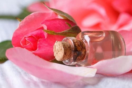 Rosenblüten für selbstgemachtes Gesichtswasser