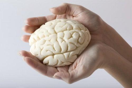 Gehirn auf der Hand