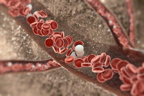 Nahrungsmittel für gesunde Arterien