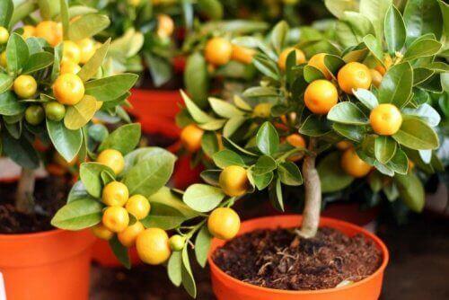 Hochstielige Pflanzen sind abgebildet.