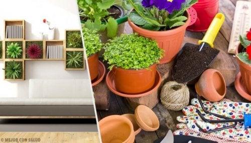 10 Dekotipps mit Pflanzen