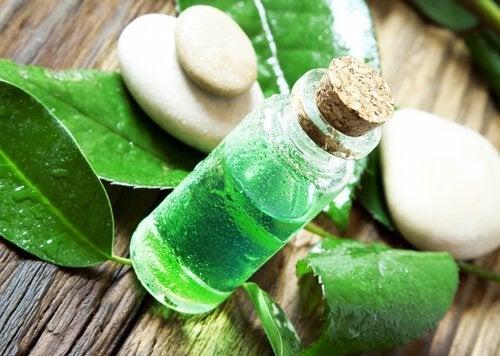 Teebaumöl gegen Flöhe und Zecken