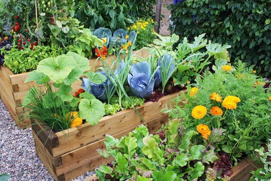 Blumen- und Gartendesign: interessante Ideen