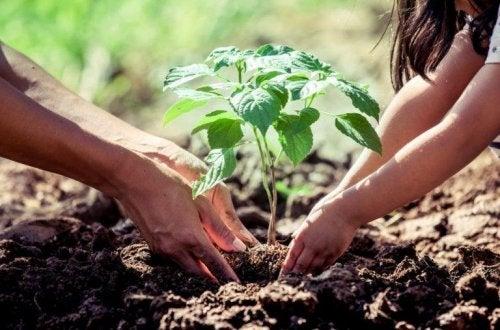 Pflanzenschutz mit Zimt!