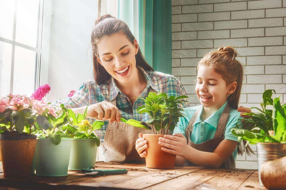 Wie Zimmerpflanzen gesundheitsfördernd sein können