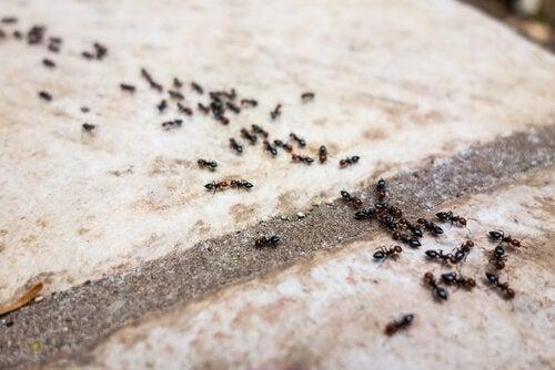 Babypuder im Haushalt gegen Ameisen