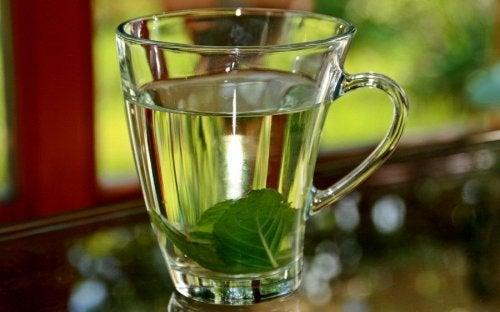 Tee aus Basilikumblättern