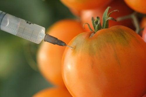 Transgene Lebensmittel