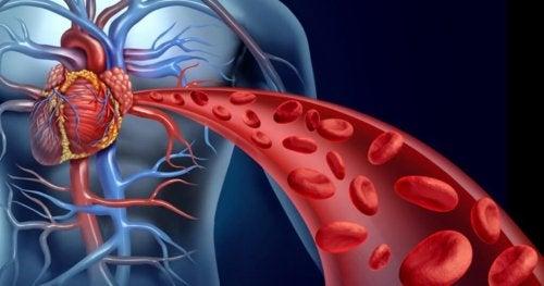 Abbildung eines Blutkreislaufes