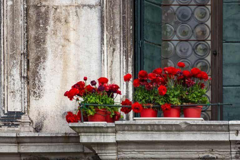 5 Blumenarten zum Verschönern deines Balkons
