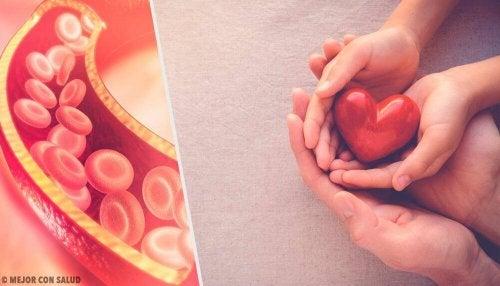 Wissenswertes über Cholesterin