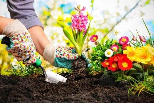 kleiner Garten - Anfang