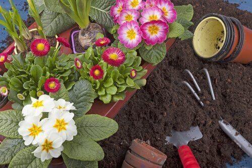 kleiner Garten - Zubehör