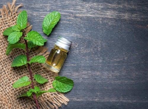 Nutze ätherisches Minzöl als Naturheilmittel