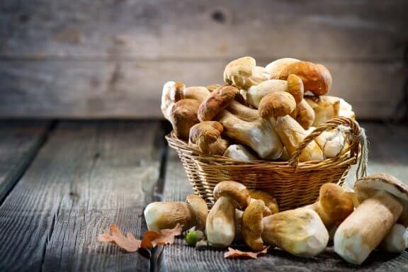 Pilze mit traditioneller Heilwirkung