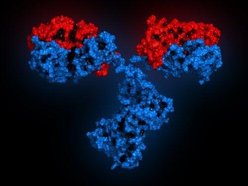 Abbildung von Antikörpern