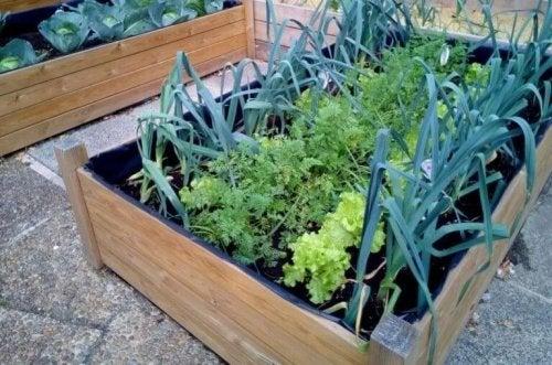 Ein Miniatur-Garten in einer Holzkiste.