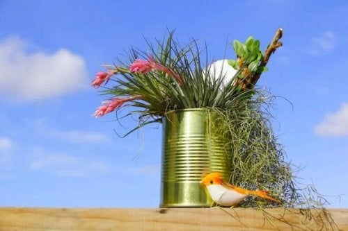 Miniatur-Garten in einer Blechdose.