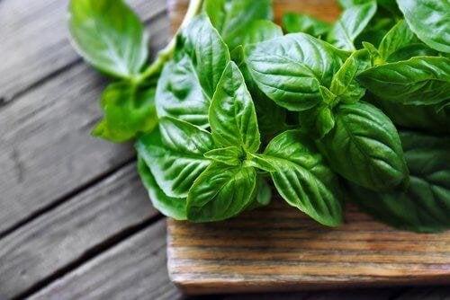 Heilpflanze Basilikum - Gesundheit