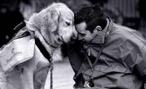 Ein Haustier ist stets ein treuer Begleiter