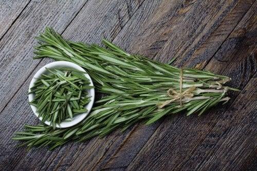 Heilpflanze Rosmarin
