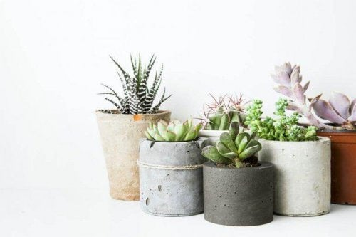 Einige Pflanzen in verschiedenen Töpfen für die Gestaltung eines Gartens.