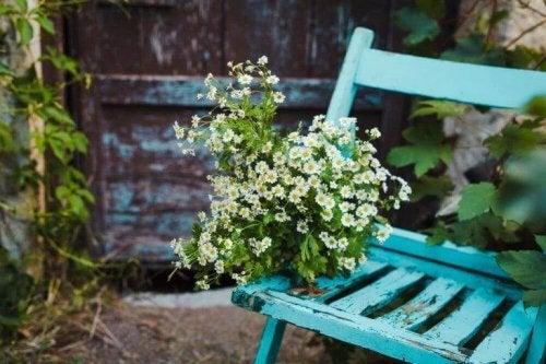 Ein Blauer Stuhl mit Pflanzen darauf.