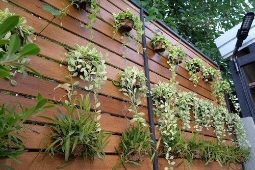 Beachte bei Pflanztöpfen für einen hängenden Garten, dass sie sicher halten
