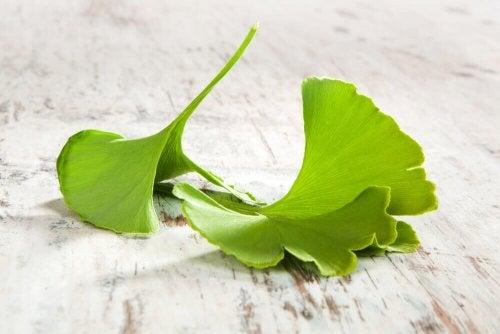 4 Heilmittel mit Ginkgo biloba
