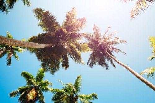 Kokosessig aus Baumharz