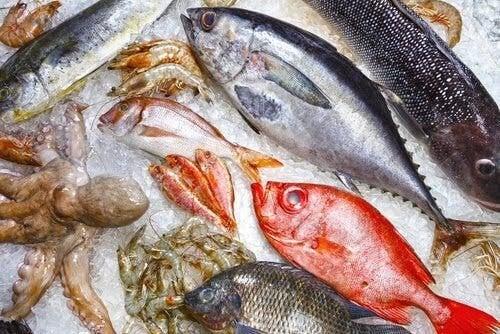 Fisch - Arten