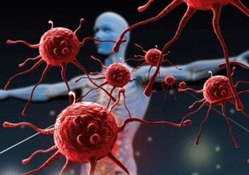 Cranberries - Imunsystem