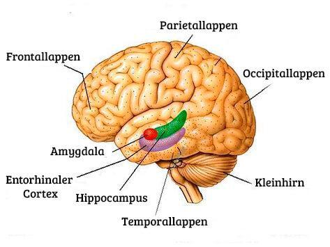kognitive Veränderungen des Gehirns