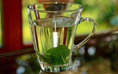 Ein Basilikum-Tee, um Fieber natürlich senken zu können.