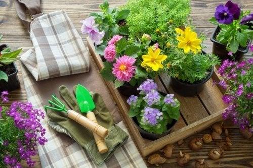Gartenwerkzeuge und Pflanzen
