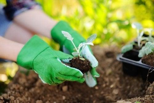 Pflanzen umtopfen: So machst du es richtig