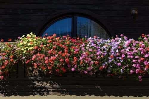 5 Duftpflanzen für einen aromatischen Garten