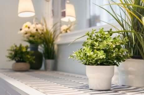 Dekoideen mit Pflanzen