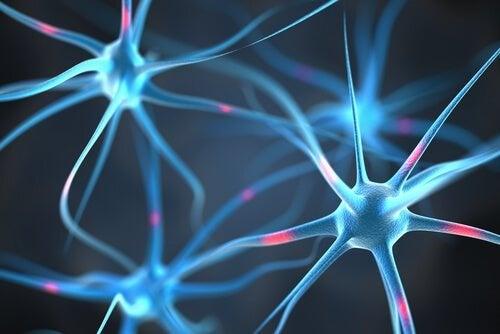 das Fett schützt die Neuronen