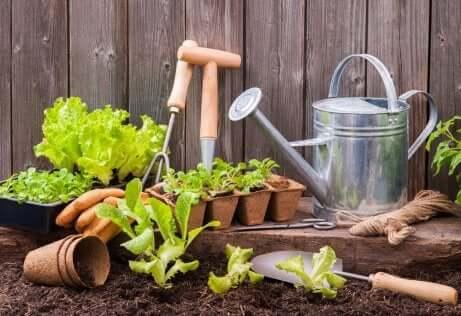 Einen Stadtgarten auf kleinem Raum anlegen