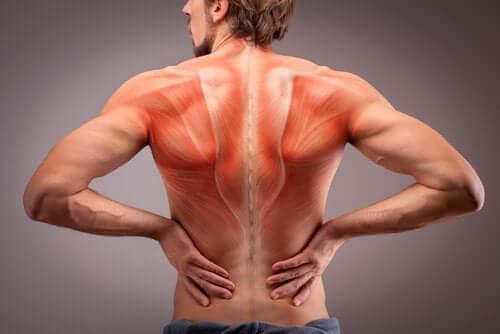 Anatomie der Rückenmuskulatur