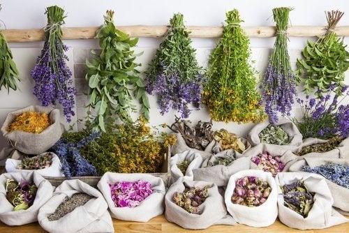 Vorteile der Phytotherapie