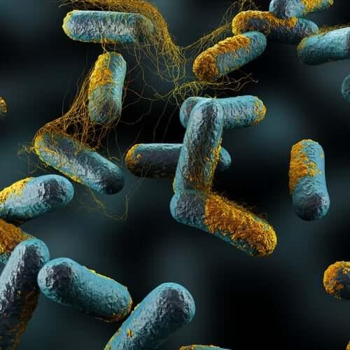 Bakteriee Clostridium botulinum