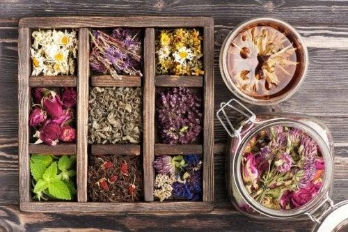 Naturprodukte werden immer beliebter und damit erreicht auch die Phytotherapie wieder große Wichtigkeit.