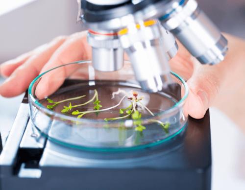 Phytotherapie als Ressource für neue Behandlungen