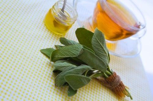 Salbei und Honig gegen Schnitte und Kratzer